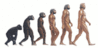 ape man evolution clip art ape man evolution